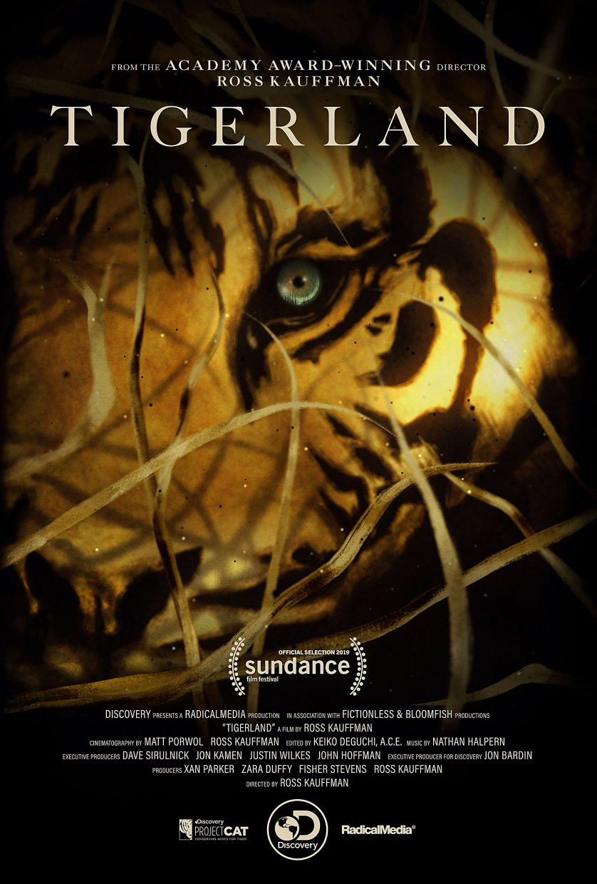 Sundance film: Passion to save tigers comes through in