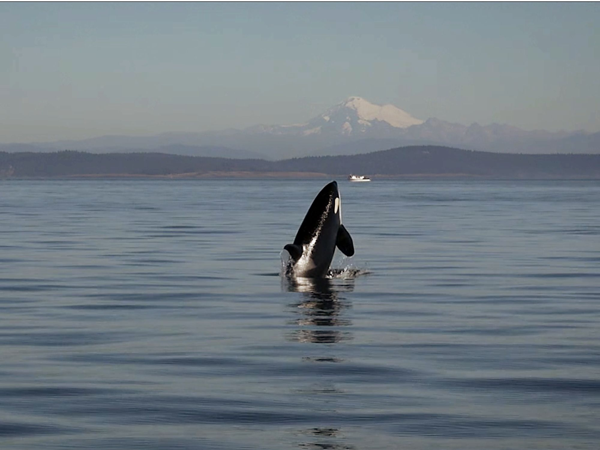 Parkite's killer whale documentary is 'Long Gone Wild,' and will be released July 16